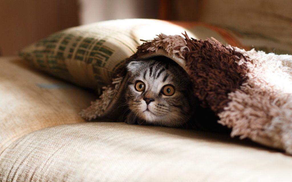 gatito asustado debajo de una manta